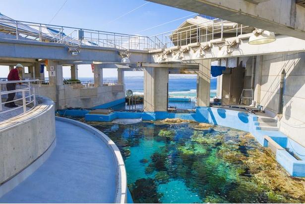 太陽の光できらめく「サンゴの海」と「熱帯魚の海」の水槽を真上から覗ける