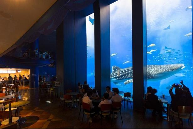 「黒潮の海」の横に位置するカフェ「オーシャンブルー」