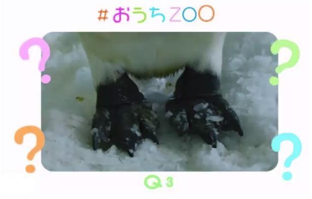 「鳥クイズ」第3弾として、ペンギンの足のカットが並ぶ
