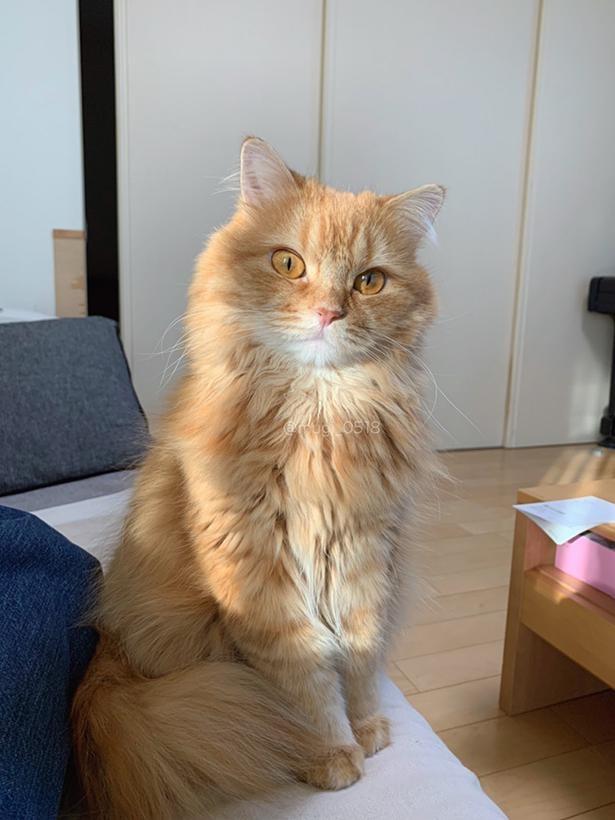 凛とした表情の美猫ちゃん