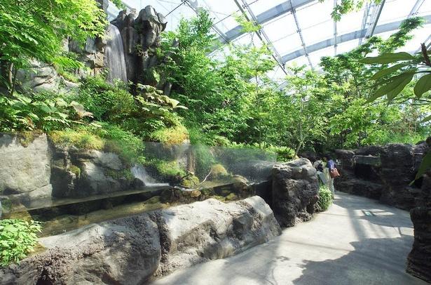 生き物が育つ環境を丸ごと再現した「ふくしまの川と沿岸」コーナー