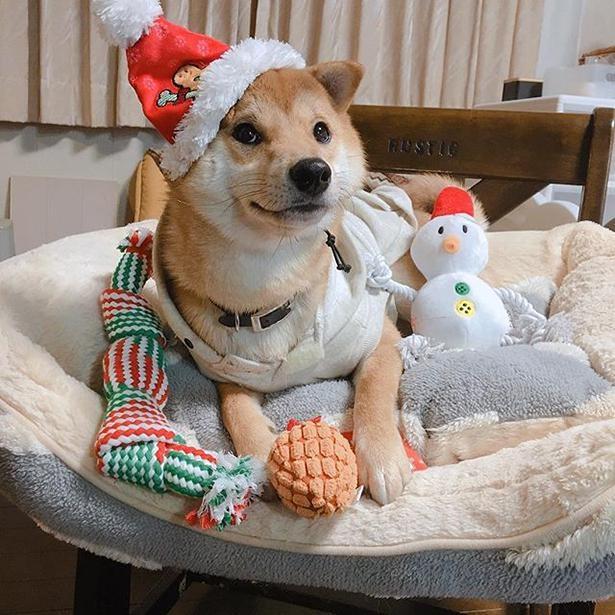 クリスマス仕様に変身!