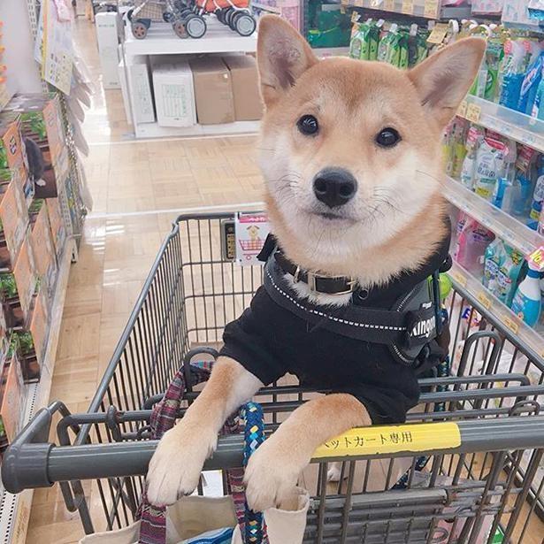 飼い主さんとお買い物へ