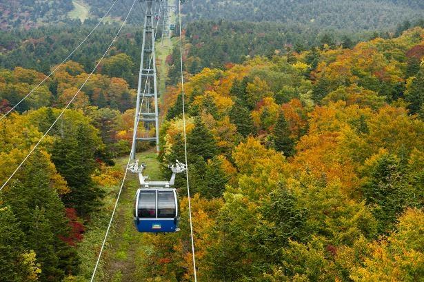 9月下旬から色づく山頂線