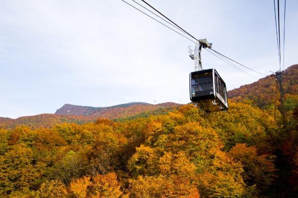 10月中旬~下旬頃は山麓線の紅葉が美しい