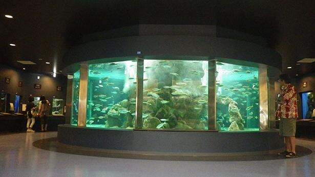 中央の水槽ではマアジやゴマサバなど、群れを作る小魚がグルグルと周回。小さな子供が水槽を見やすいように、踏み台の貸出もある(3台・無料)