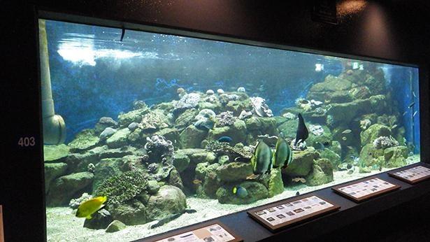 岩礁に棲息する生き物を展示する「岩礁の水槽」