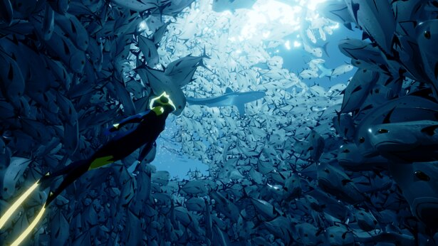 色鮮やかな魚に囲まれる夢のような体験ができる