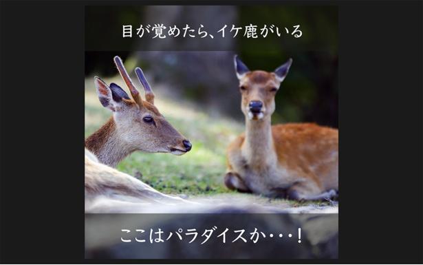 【画像】鹿の写真の上、またはコメント欄にセリフとハッシュタグ「#鹿ャプションチャレンジ」を付けて、画像を投稿
