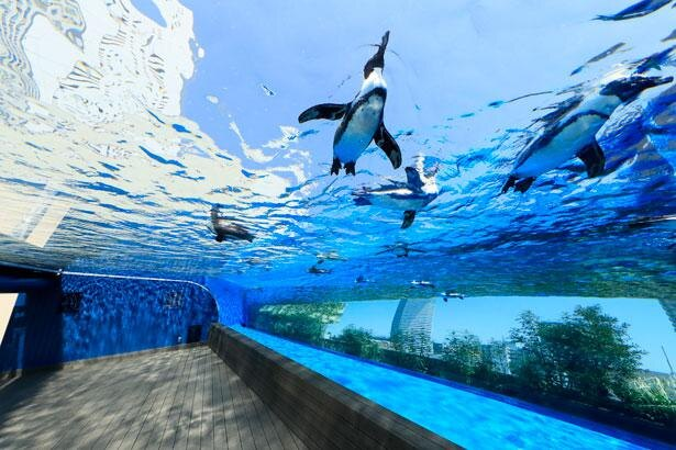 ペンギンたちが都会の空を飛んでいるかのように見える「天空のペンギン」
