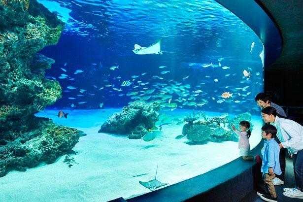 風呂1300杯分に相当する、約240トンもの水量を誇る大水槽「サンシャインラグーン」