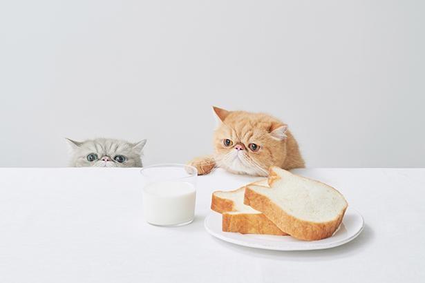 水を一切使わずに、 生地をミルク100%で仕込んだ「ねこの形」の生食パン