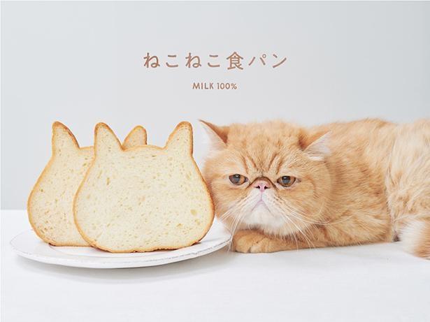 ネコの形をした食パンが話題沸騰!