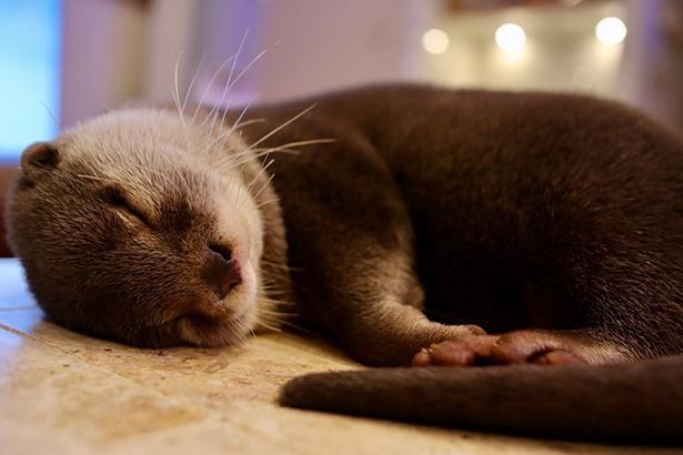 寝るのが好きなきなこくん
