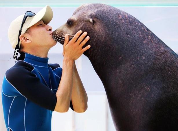 アシカとキスをする飼育員「まるのん」