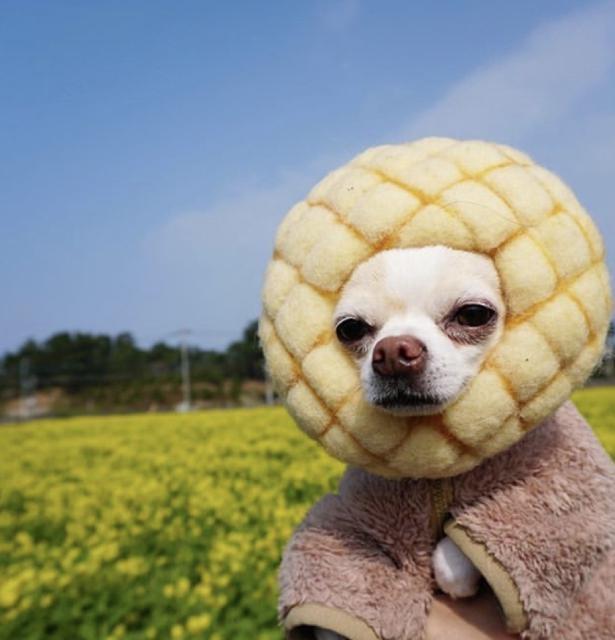 パン好きにはたまらないかも?