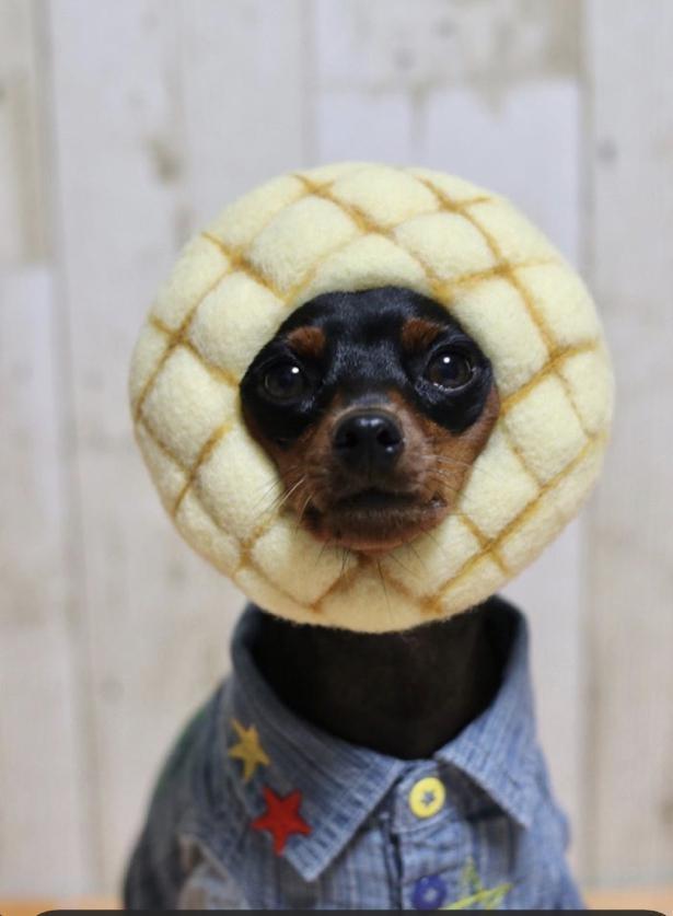 【写真】メロンパンになりきり!