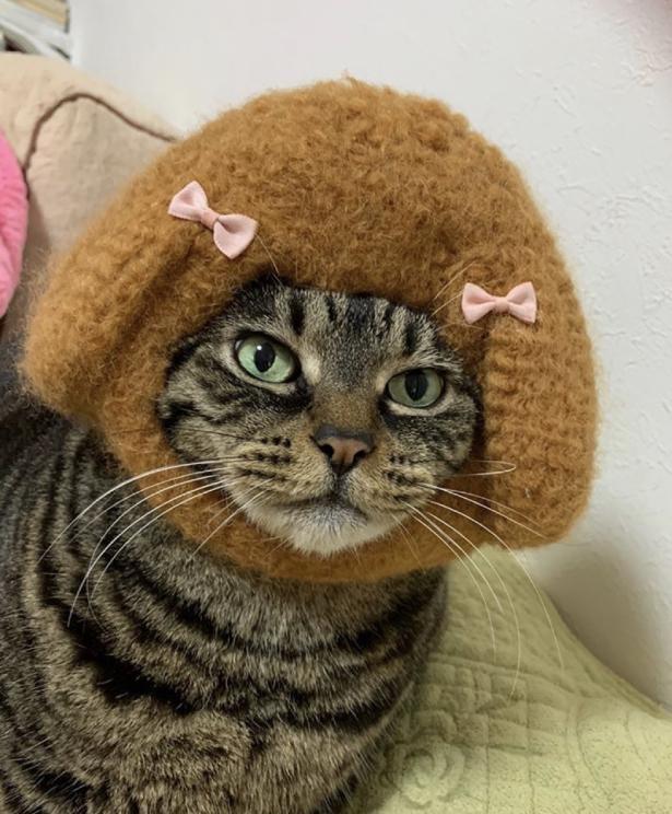 猫とトイプードルという、なんとも不思議な組み合わせ