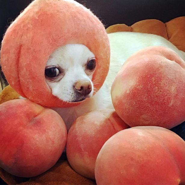 「桃はいかが?」