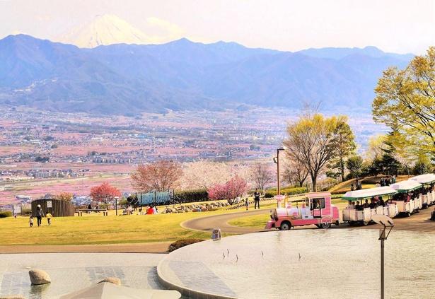 【写真】ピンク色の花畑と雪化粧をした富士山がコラボ