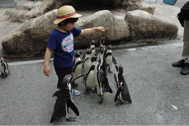 土曜・日曜・祝日開催の「ペンギンの餌やり体験」