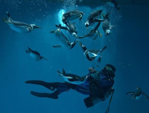 ペンギンとダイバーのふれあいランチタイムの様子