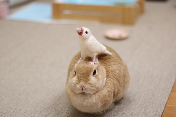 頭の上に鳥が乗っても動じないぴこちゃん