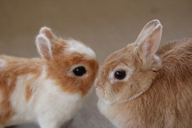 丸い顔や短い耳がそっくり!
