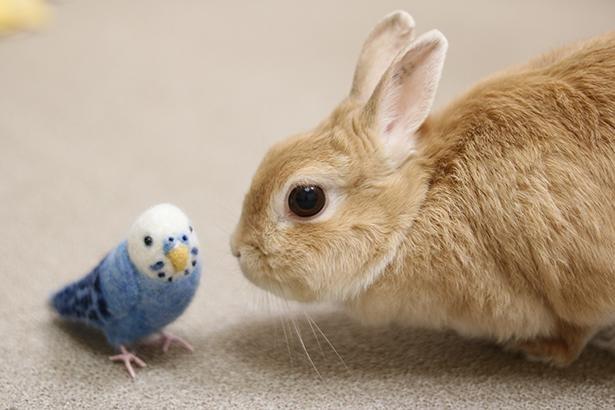 はじめましての鳥さんとパシャリ