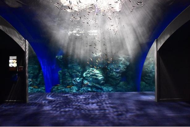 【写真】九州の近海を再現した水槽。頭上から降り注ぐ光と、空に浮かんでいるかのように見える魚が幻想的