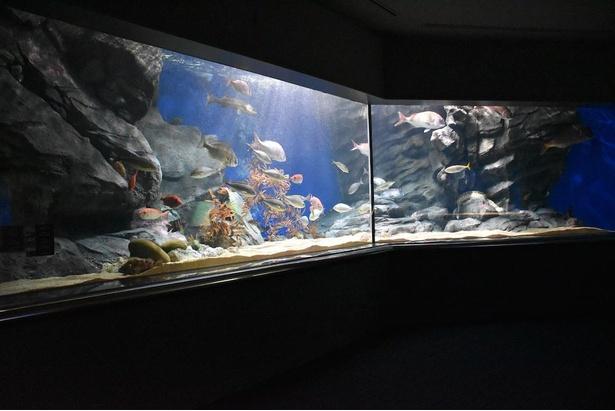 大きな鯛が泳ぐ、長崎県(西海)の水槽。日本三大急潮のひとつに数えられることもある針尾瀬戸の急流を再現