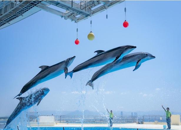 博多湾を背景とした見晴らしのいいショープール