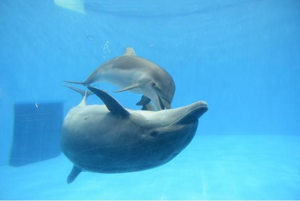 「イルカ館」では、2020年1月3日に生まれた赤ちゃんイルカのハッピーにも会える!