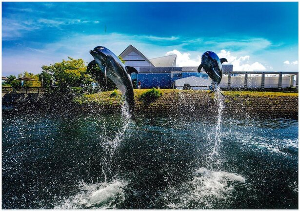 屋外の「イルカ水路」では、イルカのトレーニングの様子を見学できる