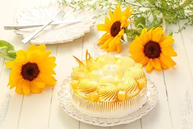 思わず写真におさめたくなる華やかなチーズケーキが登場!※画像はイメージ