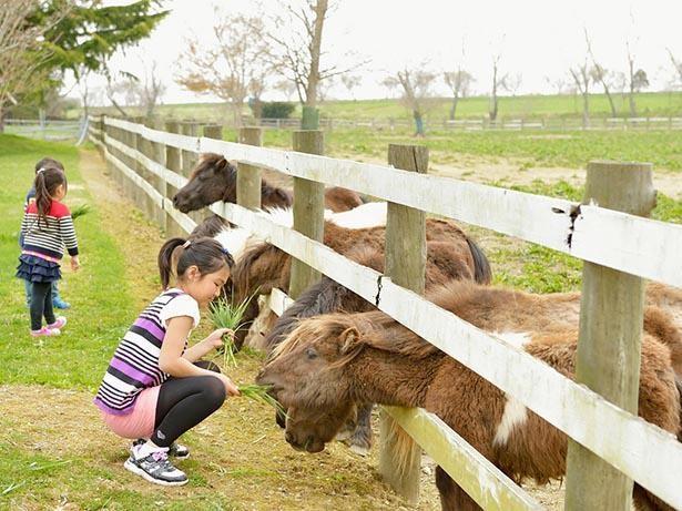 動物との触れ合いを通じて命の大切さを学べる