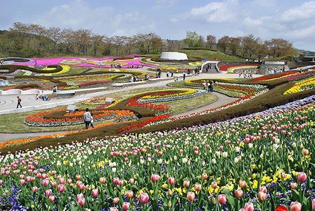 【写真】彩のひろばには年間を通して色とりどりの花が咲く