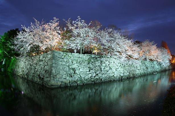 春はお堀に咲く桜がライトアップされる
