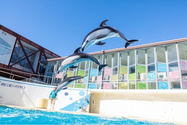 イルカやアシカショーが大人気