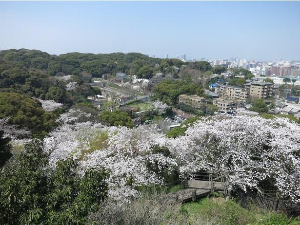 天神や博多駅方面まで一望できる展望台