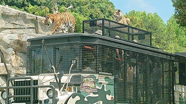 サファリ周遊バスに乗って、園内を見て回ることができる