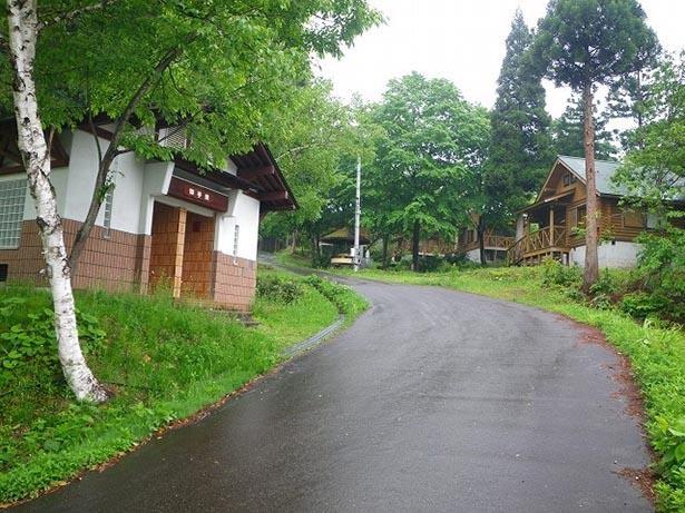 【写真】森に囲まれた敷地内にバンガローやコテージが並ぶ