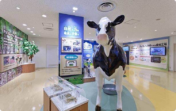 等身大の牛の模型で乳しぼり体験