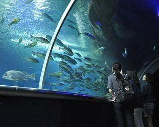 新潟市水族館 マリンピア日本海の楽しみ方をチェック!イルカショーは毎日開催