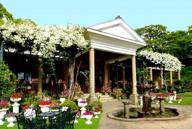 モッコウバラが咲き誇る旧オルト住宅