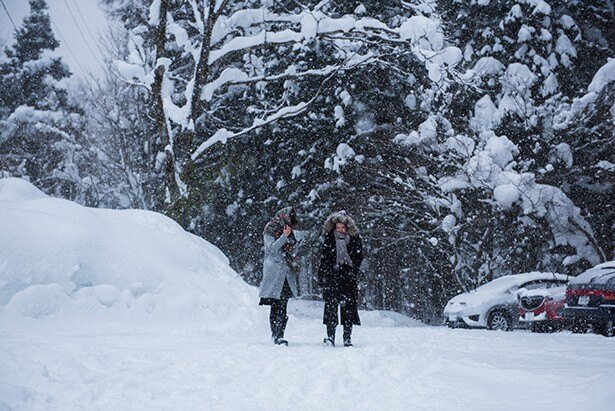 雪化粧をした広葉樹林には、神秘的な雰囲気が漂う