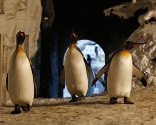 旭山動物園・雪あかりの動物園。アイスキャンドルが並ぶ園内