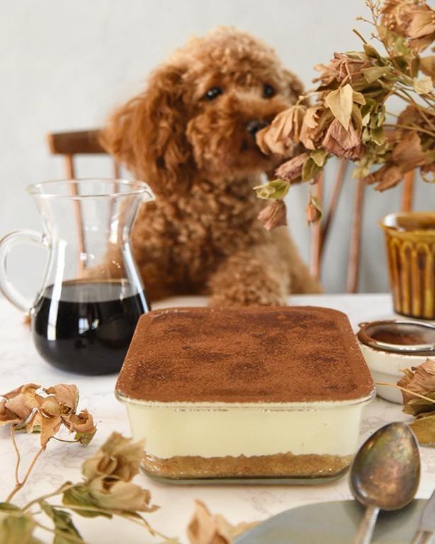暖さんの誕生日に作ったという、マスカルポーネチーズのティラミス