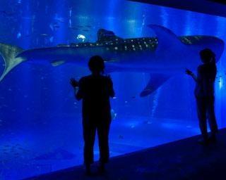 【コロナ対策情報付き】のとじま水族館の楽しみ方ガイド!日本海側で唯一のジンベエザメなど見どころ満載
