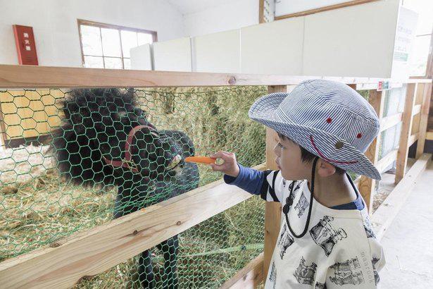 乳製品で知られる小岩井農場の観光エリア!動物たちとの触れ合いやグルメも楽しめる